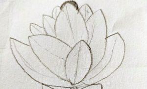 Lotus Flower Sketch